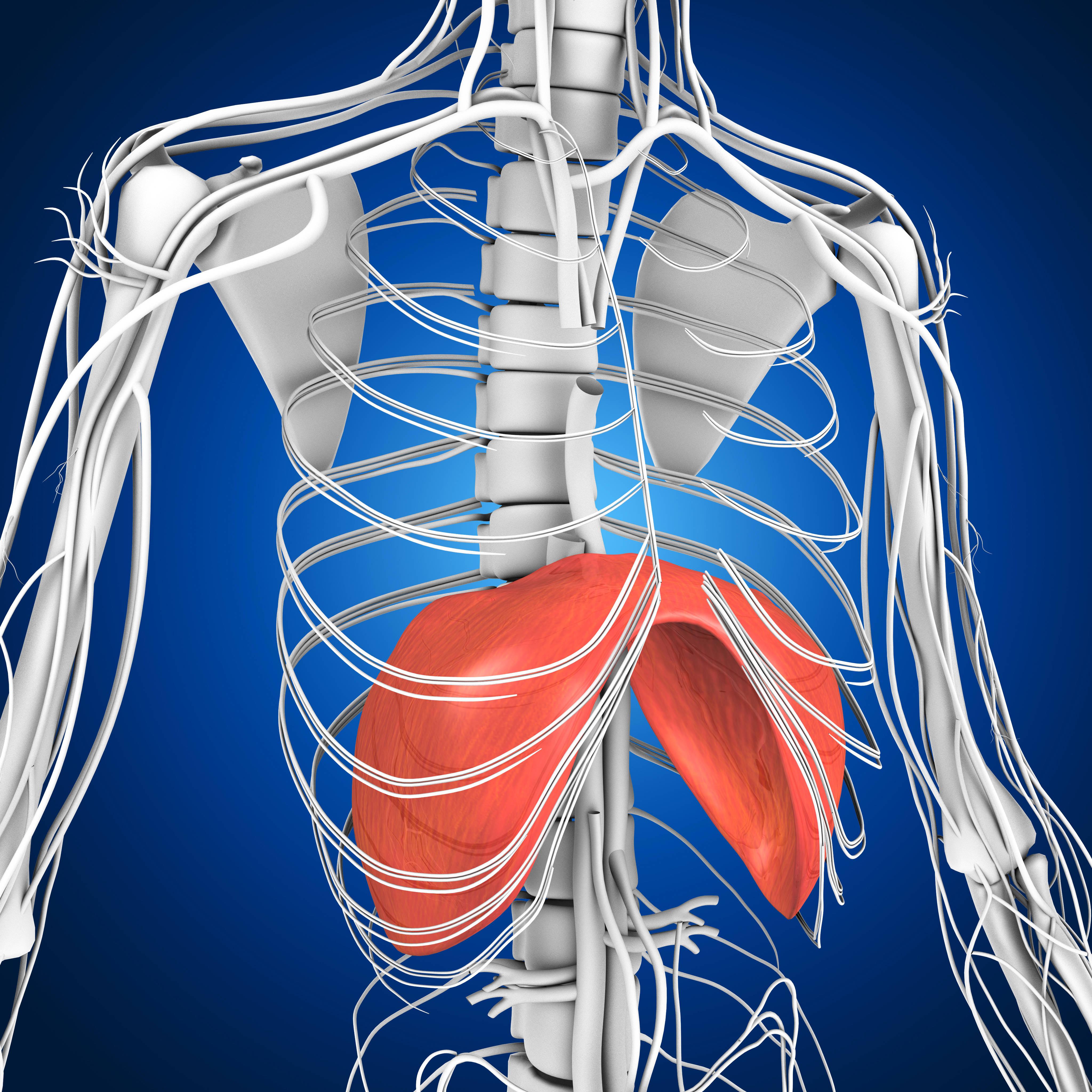 Behandlung des Zwerchfells und ihre grossartige Wirkung – Bodyfeet